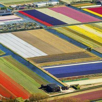 Flowerfields